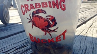 Close Up Picture Of Crabbing Bucket. Glamping Wales At Strawberry Skys Yurts.